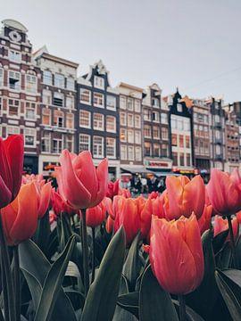 Tulips  sur Een Wasbeer