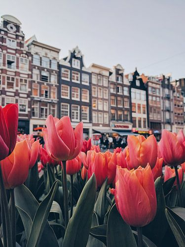 Tulips  von Een Wasbeer