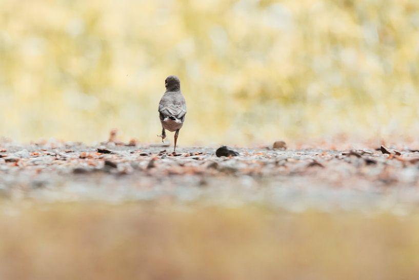 Dansende jonge vogel | Vrolijk natuurfotografie | Zuid-Kennemerland van Dylan gaat naar buiten