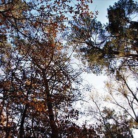 Een herfstbos in het zonlicht van DoDiLa Foto's