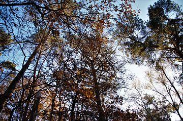 Een herfstbos in het zonlicht von DoDiLa Foto's