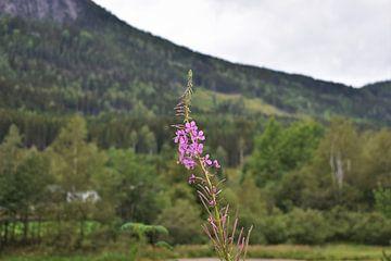 De kleuren van Noorwegen van Naomi Elshoff