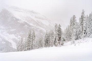 Schneelandschaft mit Nadelbäumen, Kiefern und viel Schnee von Moments by Kim
