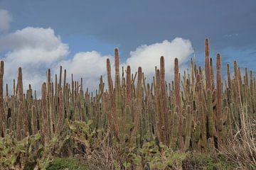 Cactus in de wolken. van Silvia Weenink