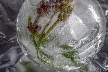 Lavender in crystal clear ice van Marc Heiligenstein