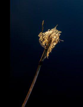 Tropfen und Federn im warmen Morgenlicht von Sia Windig