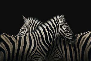 True zebra love