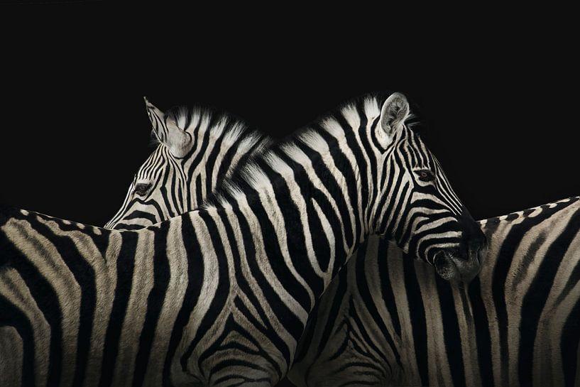 True zebra love van Elianne van Turennout