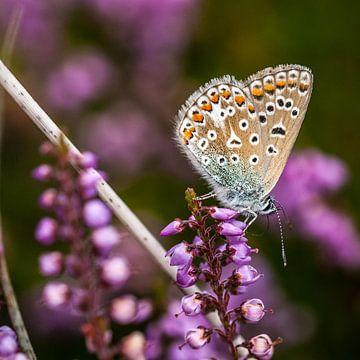 Vlinder von Hans Lunenburg