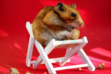 Hamster knabbert Erdnuss in Liegestuhl von Liz Collet