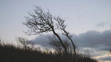 Nach dem Sonnenuntergang von Ostsee Bilder