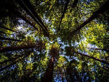 Bäume, die in den Himmel ragen von Rik Pijnenburg