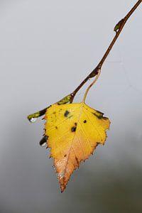 Geel blad in de mist van