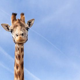 Giraffe van Elly Damen