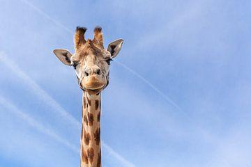 Giraffe von Elly Damen