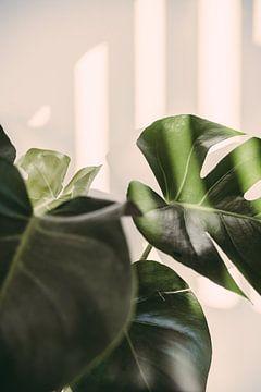 Lochpflanze von Patrycja Polechonska