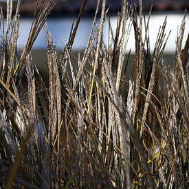 Close-up van gras in de herfst van Ton Kuijpers