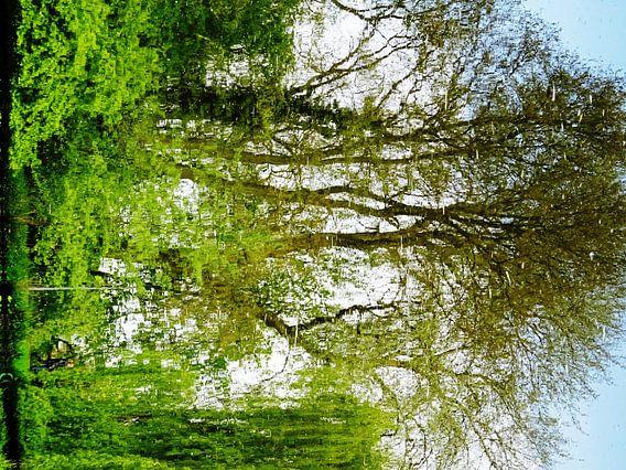 Tree Magic 162