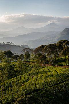 Sonnenaufgang über einer Teeplantage von Ellis Peeters