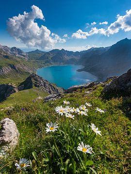 Gebirgsblumen am Lünersee von Denis Feiner