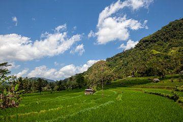 Terrassenförmiges Reisfeld in der Erntezeit auf Bali, Indonesien von Tjeerd Kruse