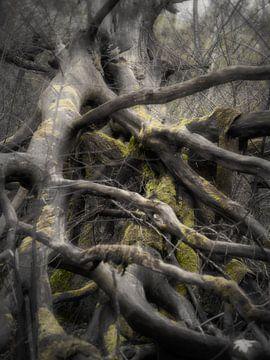 Gewirr von Ästen von Lynxs Photography