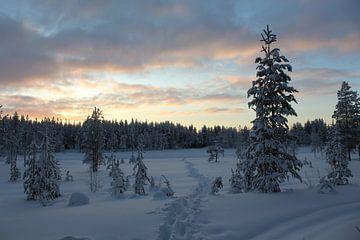 Pad door de sneeuw met mooie lucht in Fins Lapland van