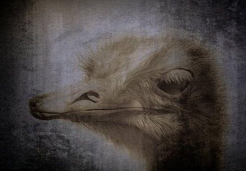 Struisvogel 2 van