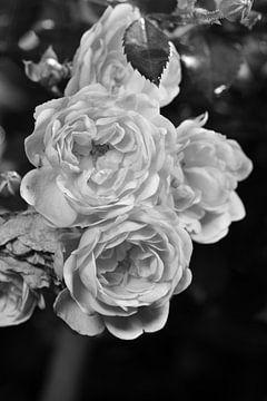 Un bouquet de roses en noir et blanc sur Gerard de Zwaan