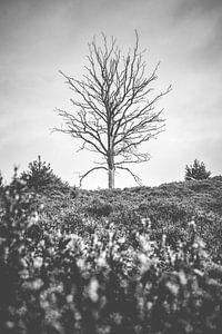 Dode boom in heide landschap