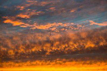 Ganzen steken af tegen door de zon gekleurde wolken von Peter Bouwknegt