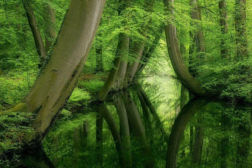Krumme Bäume Twickeler Vaart Delden von Peter Bolman