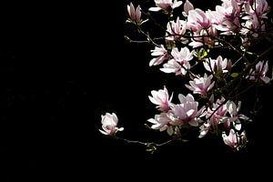 Voorjaar in bloei van Hilda Koopmans