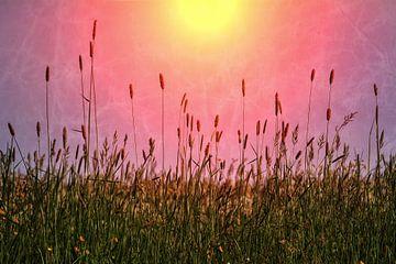 Sonnengräser von Claudia Evans