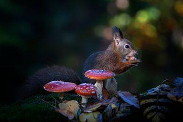 Eichhörnchen in einem Herbstwald mit Pilzen und Blättern. von Albert Beukhof