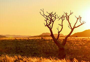 Sonnenuntergang in der Namib von Britta Kärcher