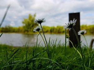 bloempjes aan de linge - betuwe holland van Frans Versteden