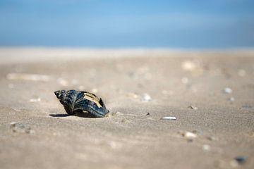 schelpen  op strand van Karijn | Fine art Natuur en Reis Fotografie