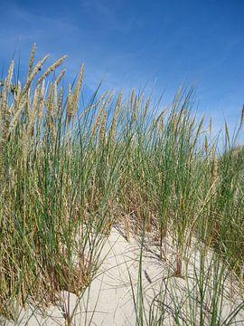 Helmgras in de duinen van Mariska van Essen