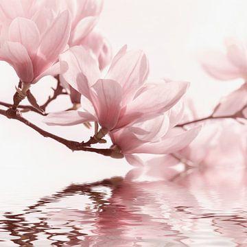 Magnoliabloesem van Violetta Honkisz