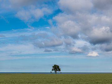 Eenzame boom van Denis Feiner