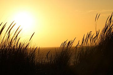 Ondergaande zon van Chloë Luyckx
