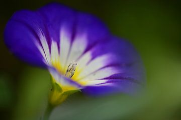 eine kleine künstlerische lila Sommerblume von Jessica Berendsen