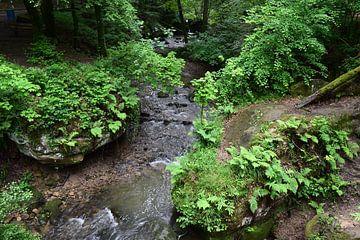Blick von einem Wasserfall im Wald von Nicolette Vermeulen