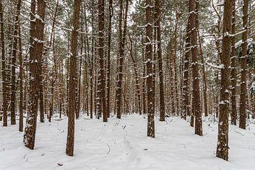 Winters bos 2 van Albert Mendelewski