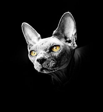 Portrait if a sphynx cat with yellow eyes von Ribbi The Artist