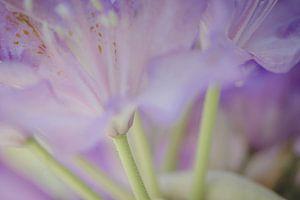 Lila bloemen in soft focus van Margreet van Tricht