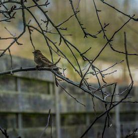 moineau dans le jardin sur Andre Klooster