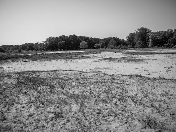 Sand in der Nähe des Waldes