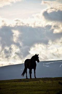 Silhouette d'un cheval islandais en été sur Elisa Hanssen